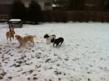 Four dogs playing in snow