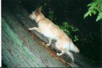 Kaiya  climbs a tree