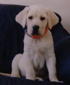 Bo cute Pup