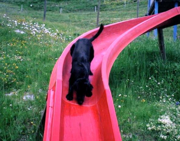 Safie on slide