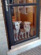 3 Dog door