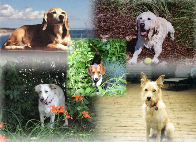 The dogs of kona's touch