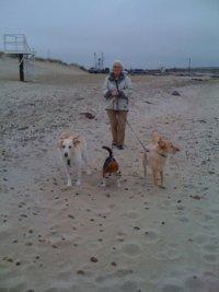 3 Dogs walk Alison