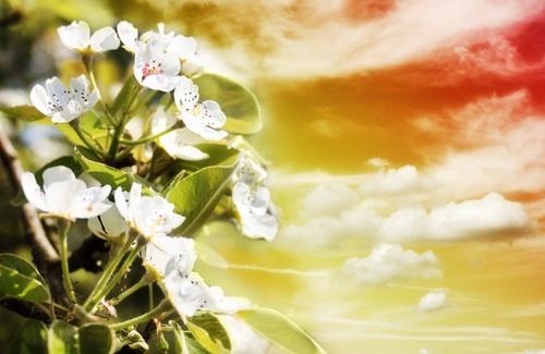 main flower