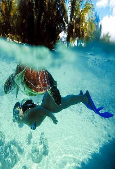 Tahiti turtle snorkel