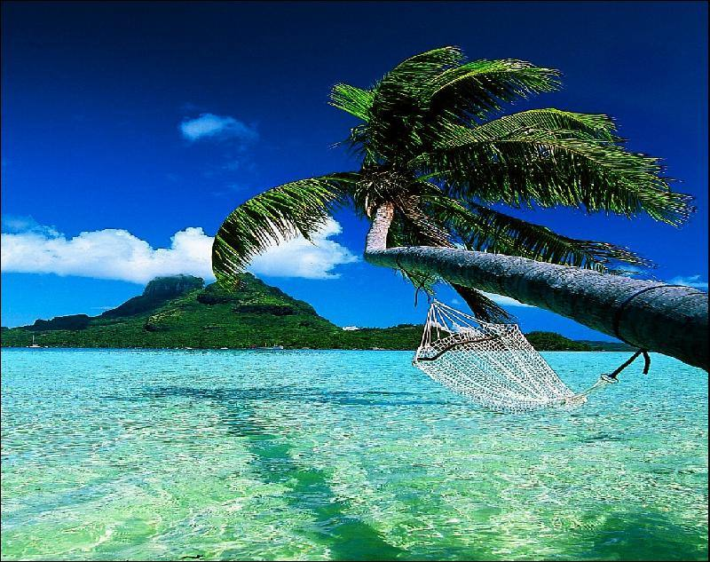 Tahiti Island palm