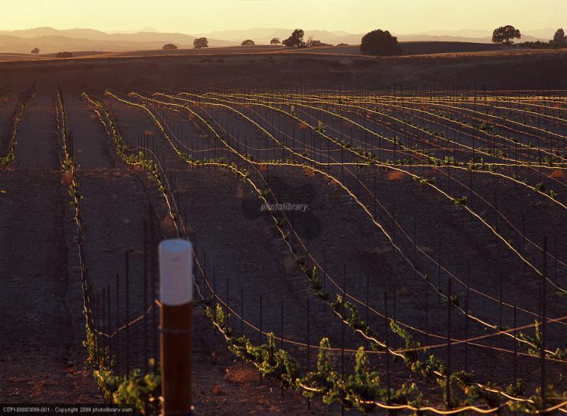 wine_vineyards.jpg