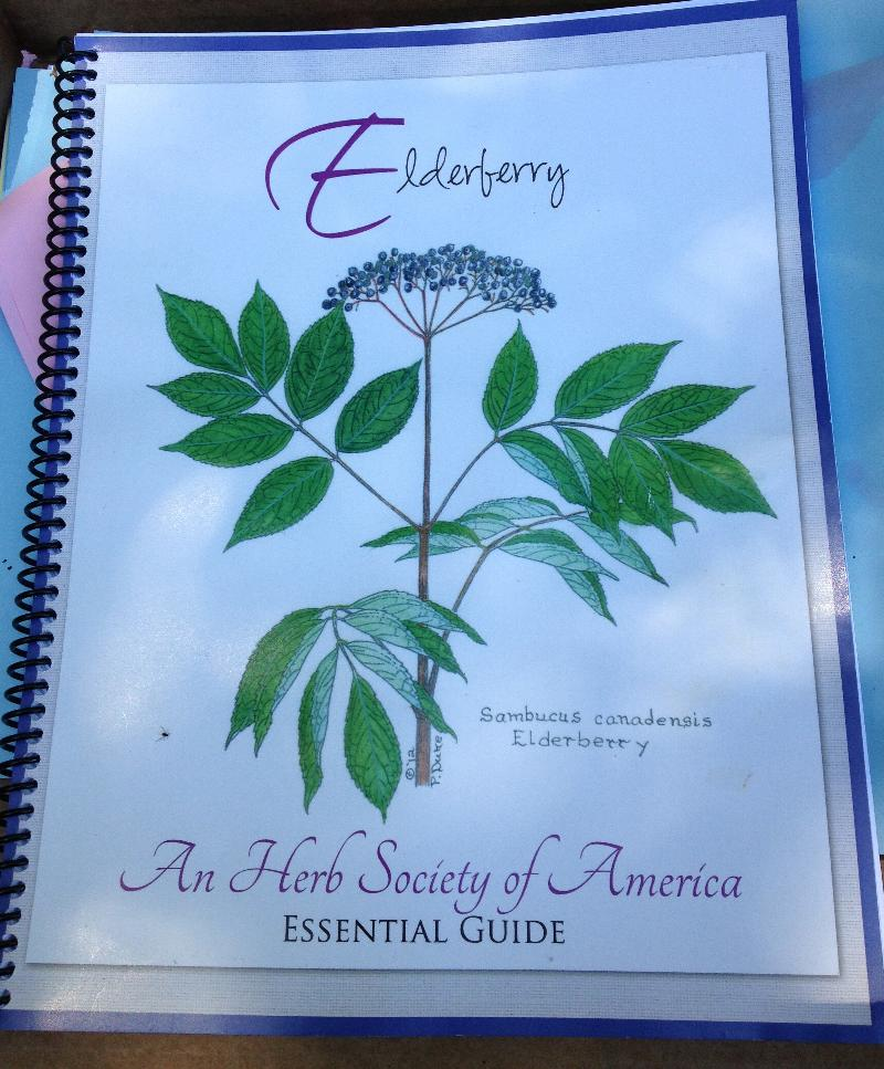 elderberry guide, Herb Society of America