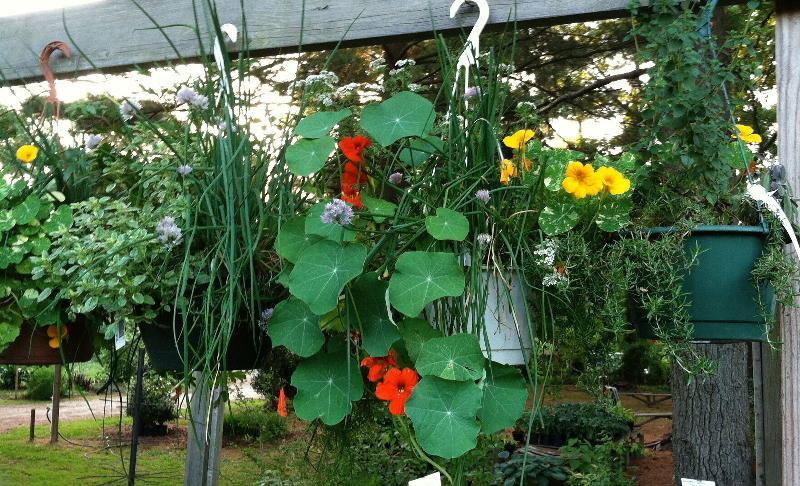 herb hanging pots