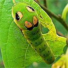 spicebush larvae