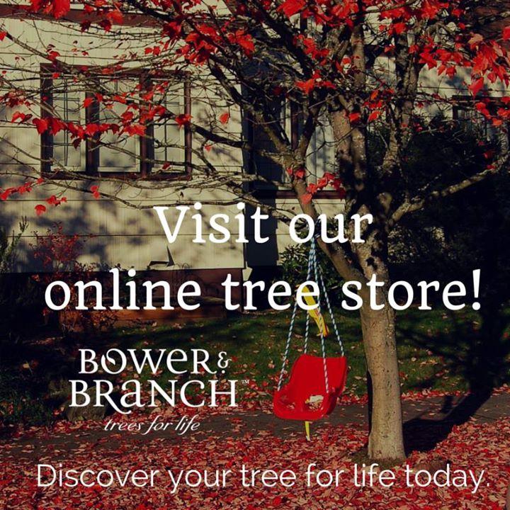 online tree store