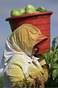 Immokalee worker