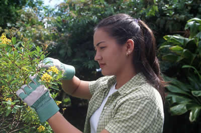 woman-trimming-hedge.jpg