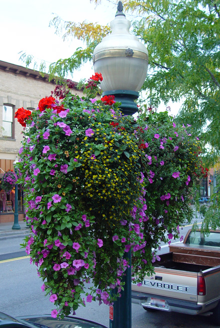 Coeur d'Alene Downtown Hanging Baskets