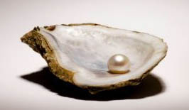 Pearl From A Shell