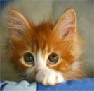 kitty sad eyes