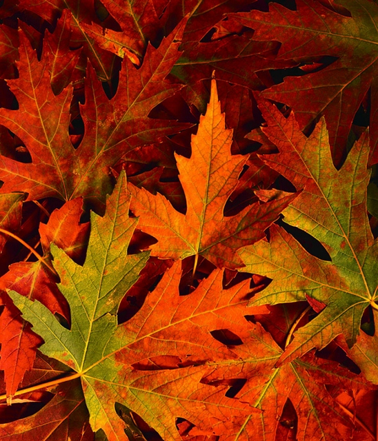 Close up of fall leaves