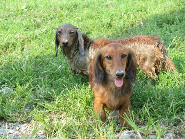 Spring Mud Pups
