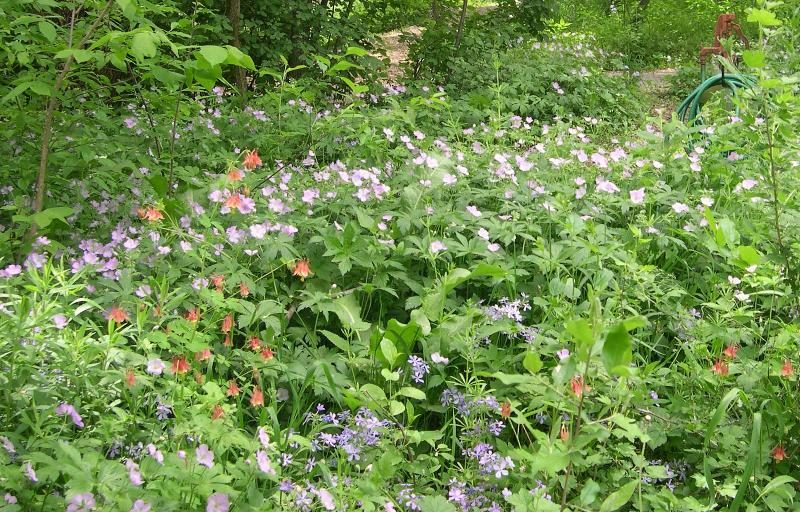 Spring woodland flowers