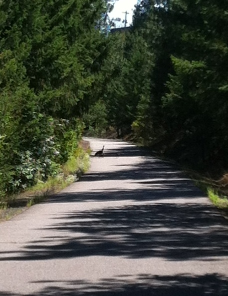 Wild Turkey Trail Crossing