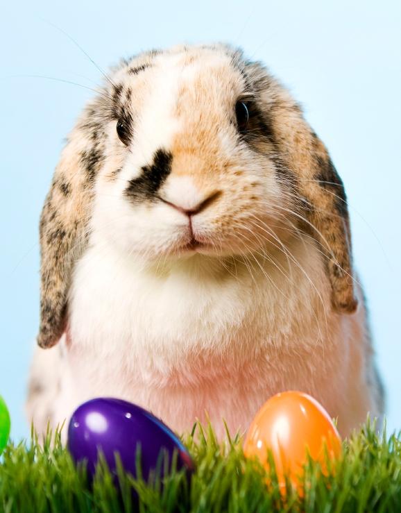 Easter Bunny shorter