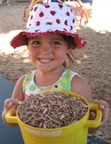 Gracie with wood chips