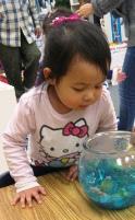Exploring Fishbowls