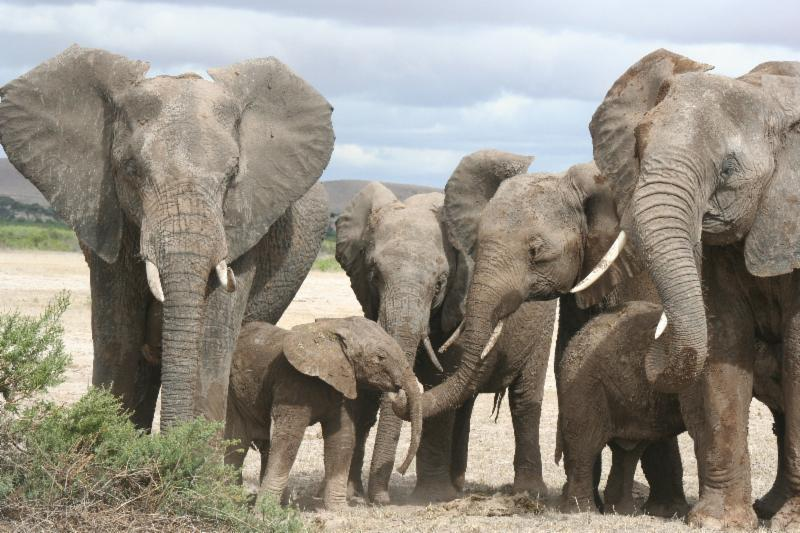 Elephants Are Smarter Than Anyone Thought