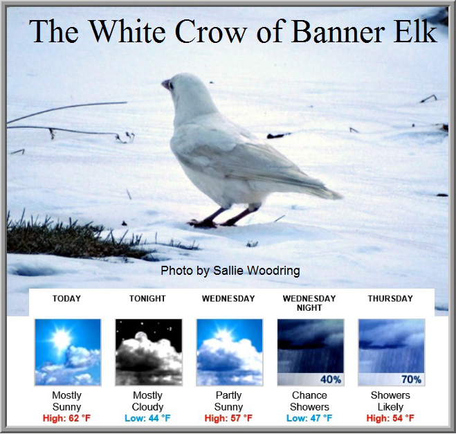 The White Crow of Banner Elk was first photographed by zbhRn6xa