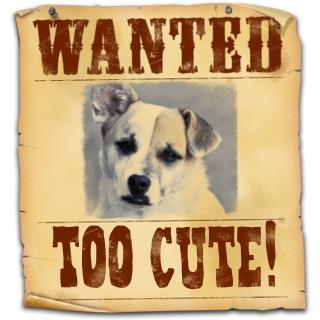 Ziggy Wanted