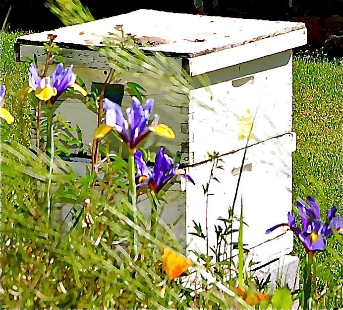 Hive with Iris