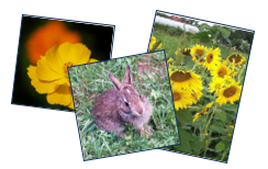 Flowers and Bunny Collage