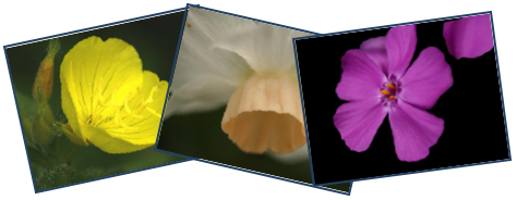 Three Flower Images