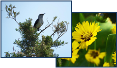 Bird & Flower Collage