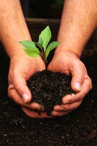 soilforearthmoment
