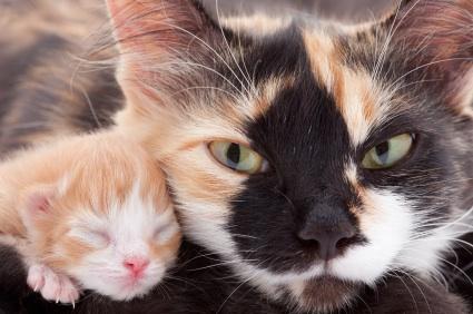 URGENT ALERT: When You Find Newborn Kittens...