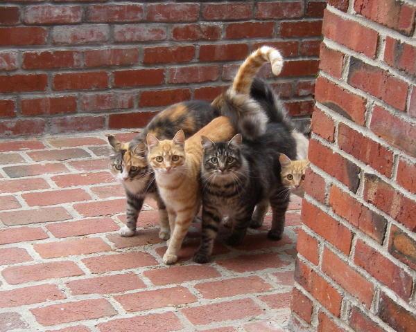 Vicky Semones cats