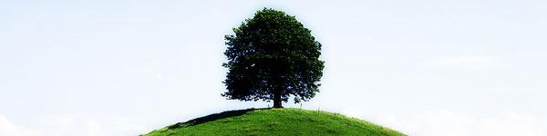 seasonal_tree.jpg