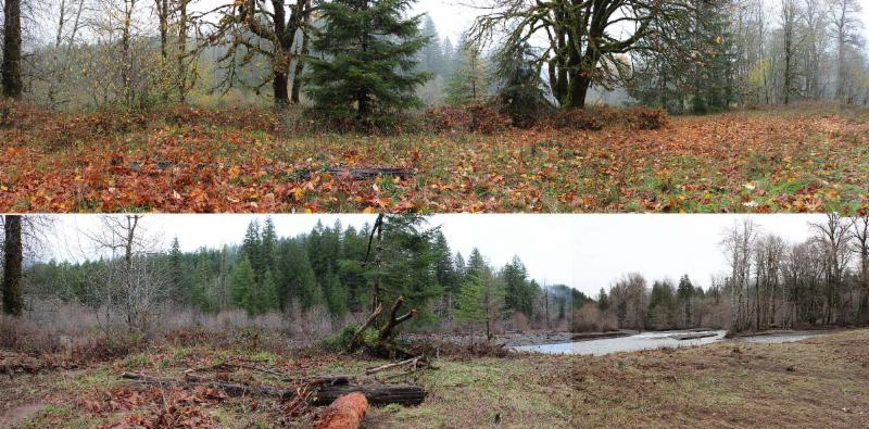 Smith Homestead meadow stream bank before and after the December flood.