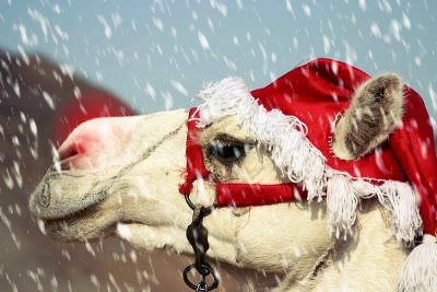 x mas camel