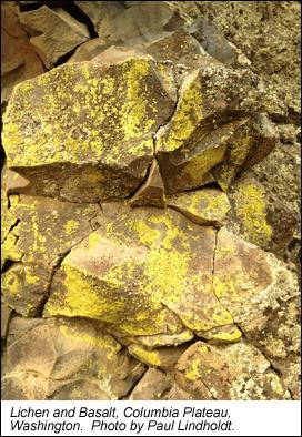 lichen basalt