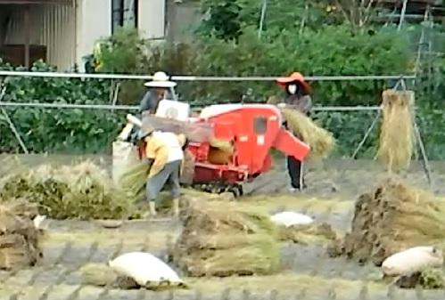 Rice Crew