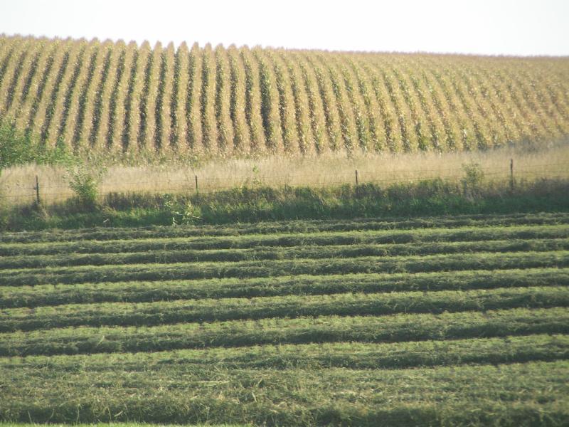 Hay-Corn