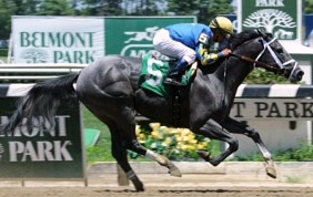 All in Blue's Maiden win, Belmont