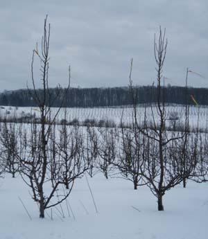 Winter_in_our_Orchard