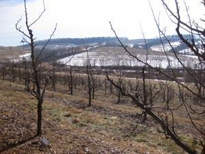 wintertime_orchard_view
