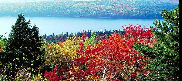 red fall colors