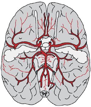 brainblood