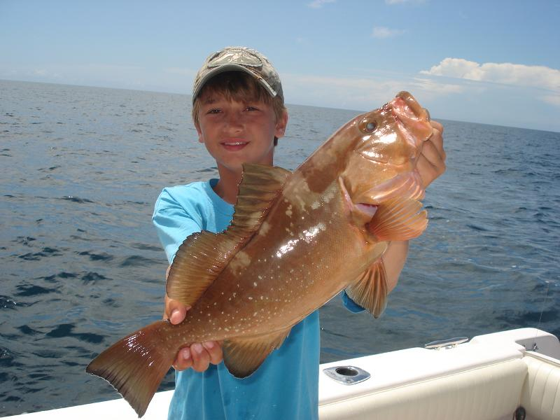 Chase red grouper