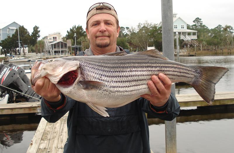 Bobby Taylor with a striper